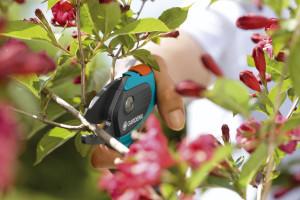 Jak dbać o kwiaty cięte? Kwiaciarnia Wysyłkowa