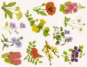 Poznaj znaczenie kwiatów – Dostawa kwiatów