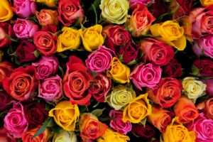Kolory Kwiatów – co oznaczają? Jak wysłać kwiaty