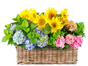 Kwiaciarnia Bydgoszcz radzi: Które rośliny poprawią jakość powietrza w Twoim domu?