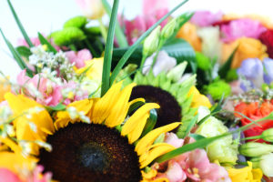 Kwiaty wiosenne- kolorowa niespodzianka!